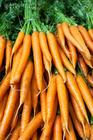 Daucus carota Extract