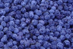 sell  blueberry  powder
