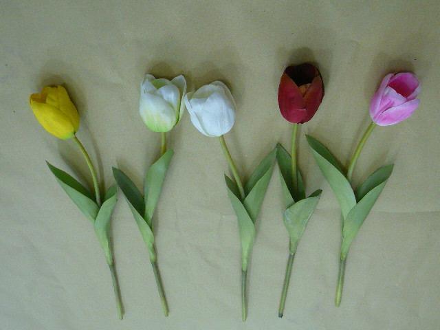 Tulip 8colors 郁金香 8色